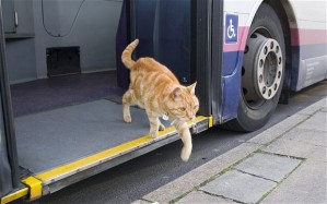 Cat leaving bus to go to work after going round and round on bus.