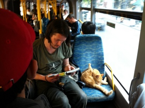 Cat on way to work, grooming on bus (no time to shower at home).