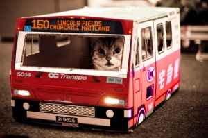 Cat late for work, hands tied as bus reliant.